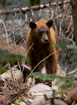 bear_2_sm